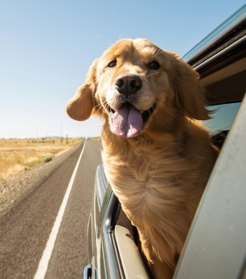 Travelling Pets In Text