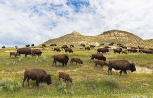 North Dakota Offers Miles of Scenic Landscape to Hike, Camp, and View Wildlife